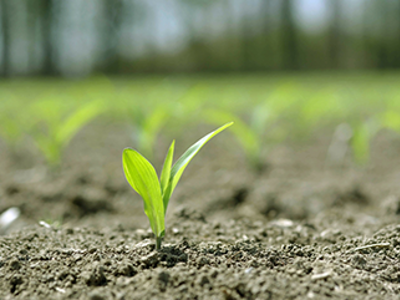 Plant budding - 4R article